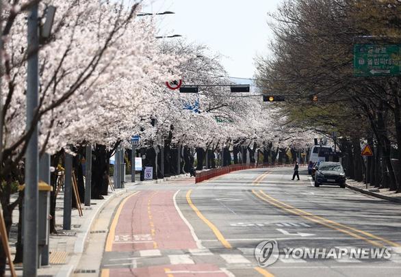 Người Hàn phải rút thăm để trúng thưởng ngắm hoa anh đào - Ảnh 5.