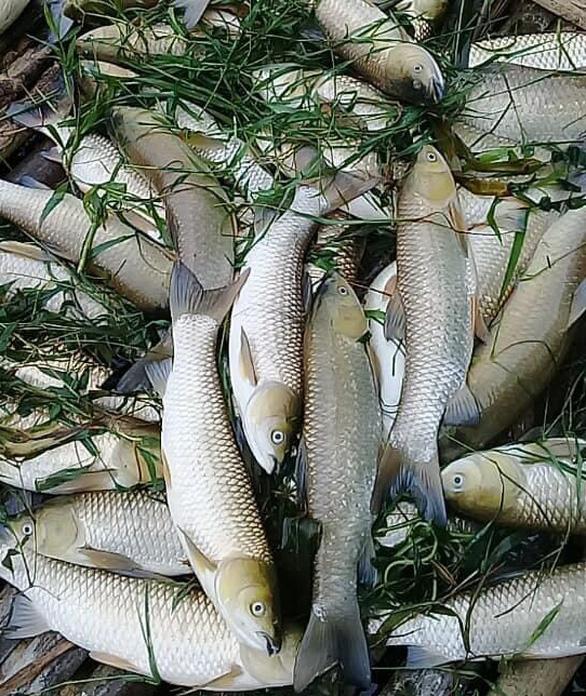 Thanh Hóa: Cá trên sông Mã chết hàng loạt không phải do dịch bệnh - Ảnh 2.