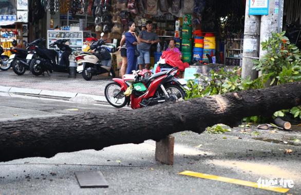 TP.HCM: Mưa to gió lớn, cây ngã đè xe máy làm 2 người bị thương - Ảnh 4.