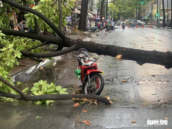 TP.HCM: Mưa to gió lớn, cây ngã đè xe máy làm 2 người bị thương - Ảnh 1.
