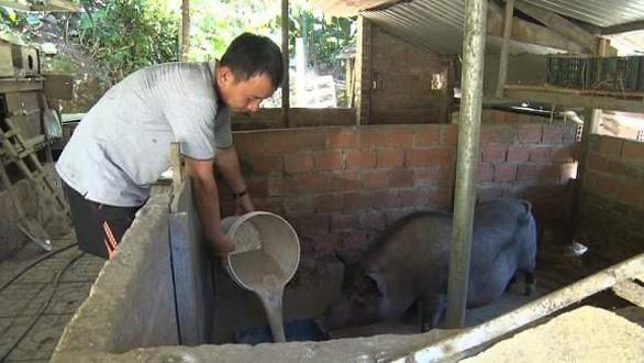 Đề xuất không cho chăn nuôi trong nội thành Hội An, Tam Kỳ và Điện Bàn - Ảnh 1.