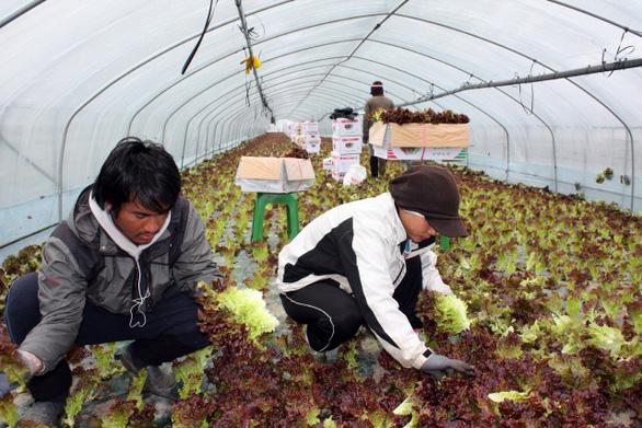 Hàn Quốc gia hạn lưu trú 1 năm cho lao động nước ngoài, bao gồm Việt Nam - Ảnh 1.