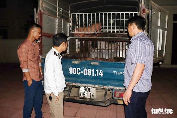 Bắt xe chở 50 con heo giống nhiễm bệnh từ Hà Tĩnh ra Hà Nam - Ảnh 1.