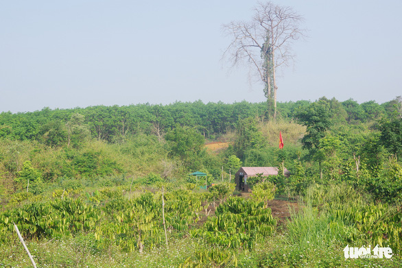 Tuần tra xuyên rừng sâu khóa đường mòn, lối mở ngăn dịch xâm nhập - Ảnh 6.