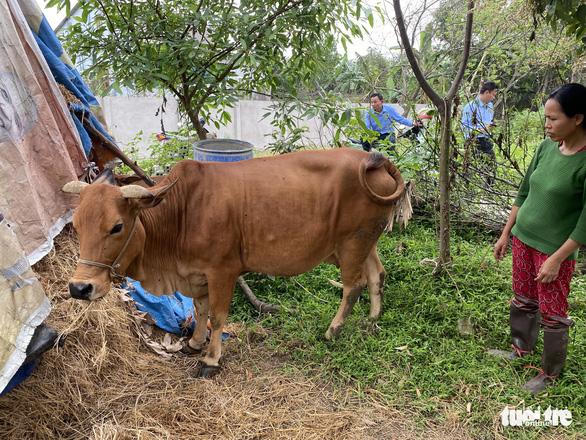 Bắt xe chở 50 con heo giống nhiễm bệnh từ Hà Tĩnh ra Hà Nam - Ảnh 3.
