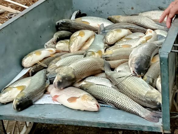 Cá lại chết hàng loạt trên sông Mã, hơn 14 tấn chỉ trong ngày 14-4 - Ảnh 2.