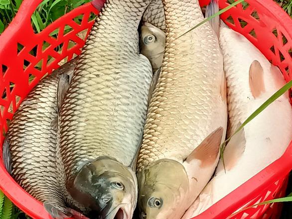 Cá lại chết hàng loạt trên sông Mã, hơn 14 tấn chỉ trong ngày 14-4 - Ảnh 3.