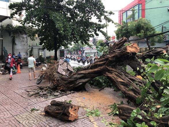 Sáng 16-4, Sài Gòn mưa lớn, nhiều cây bật gốc, tét nhánh, 1 người cấp cứu - Ảnh 2.
