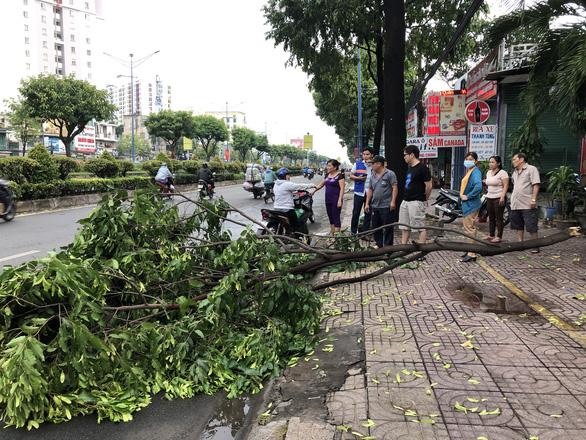 Sáng 16-4, Sài Gòn mưa lớn, nhiều cây bật gốc, tét nhánh, 1 người cấp cứu - Ảnh 1.