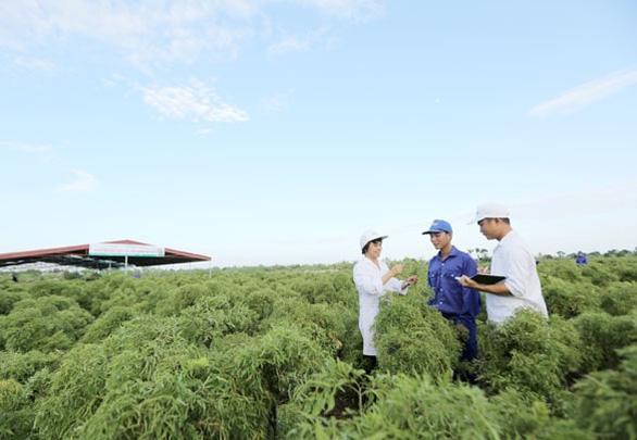 Cây trăm tỷ trong thuốc bổ não thảo dược đứng đầu thị trường Việt Nam - Ảnh 1.