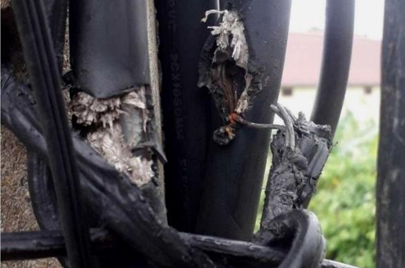 Lưới điện tổn thất bất thường, lộ ra chiêu trộm điện liều lĩnh - Ảnh 1.