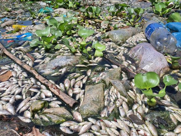 Cá chết nổi trắng lòng hồ, bốc mùi nồng nặc giữa thành phố Tam Kỳ - Ảnh 2.