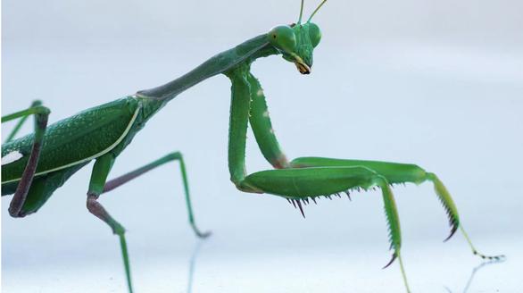 Muỗi, chuột, côn trùng… cắn phá gần 27 tỉ USD mỗi năm - Ảnh 1.