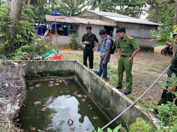 Chủ nhà ở Phú Quốc giao nộp 58 con rùa từ rừng bò vào nhà - Ảnh 1.