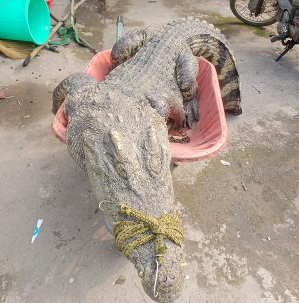 Phát hiện cá sấu 70kg trong vườn nhà, người đàn ông bắt lột da xẻ thịt - Ảnh 3.