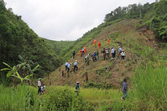 Trồng quế bản địa gây rừng ở Quảng Nam - Ảnh 1.