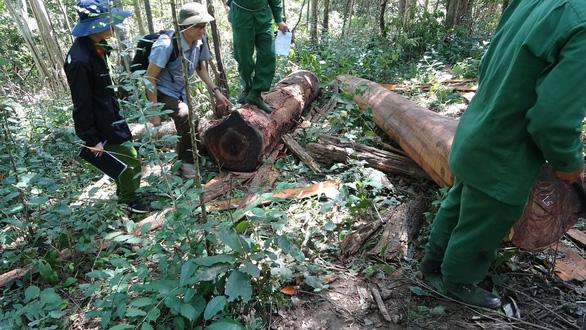 Khởi tố 37 người tham gia phá rừng giáp ranh Đắk Lắk - Phú Yên - Ảnh 3.