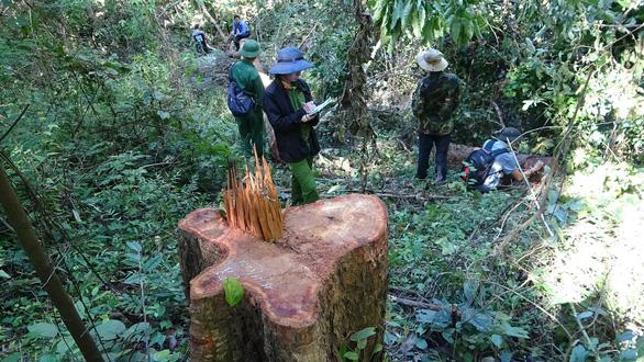 Khởi tố 37 người tham gia phá rừng giáp ranh Đắk Lắk - Phú Yên - Ảnh 1.