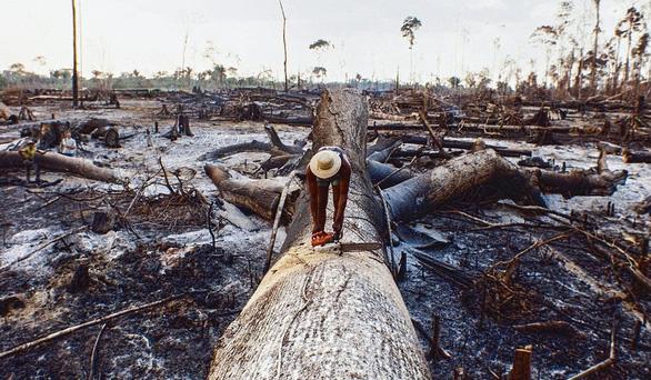 Càng phá rừng, càng phát sinh nhiều dịch bệnh như COVID-19 - Ảnh 1.