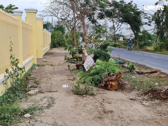 Sau vụ cây phượng đè chết nữ điều dưỡng, cho rà soát toàn bộ cây xanh - Ảnh 1.