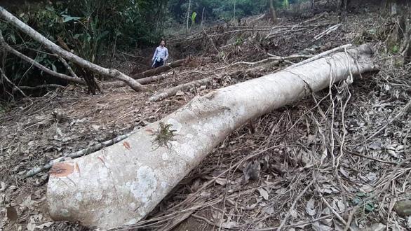 Phê bình giám đốc, cảnh cáo nhiều cán bộ để phá rừng đặc dụng Vườn quốc gia Xuân Sơn - Ảnh 1.