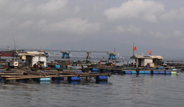 Vụ cá chết ở ven biển Thanh Hóa: Không bán cá chết ra thị trường, giữ cá nuôi lồng - Ảnh 2.