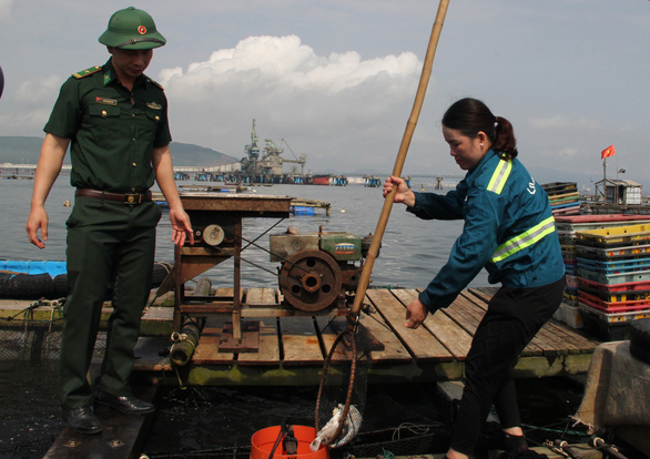 Vụ cá chết ở ven biển Thanh Hóa: Không bán cá chết ra thị trường, giữ cá nuôi lồng - Ảnh 1.