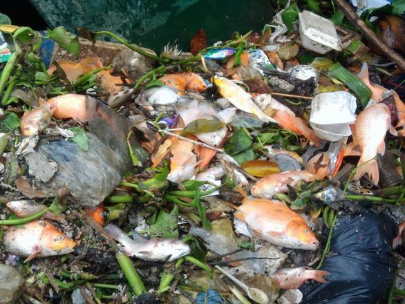 Hai cơn mưa trái mùa làm chết 14 tấn cá trên kênh Nhiêu Lộc - Thị Nghè - Ảnh 2.