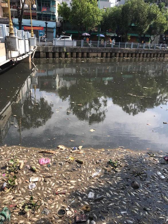Hai cơn mưa trái mùa làm chết 14 tấn cá trên kênh Nhiêu Lộc - Thị Nghè - Ảnh 1.