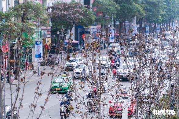 Hà Nội bỏ toàn bộ hàng phong lá đỏ trên đường Nguyễn Chí Thanh - Ảnh 1.