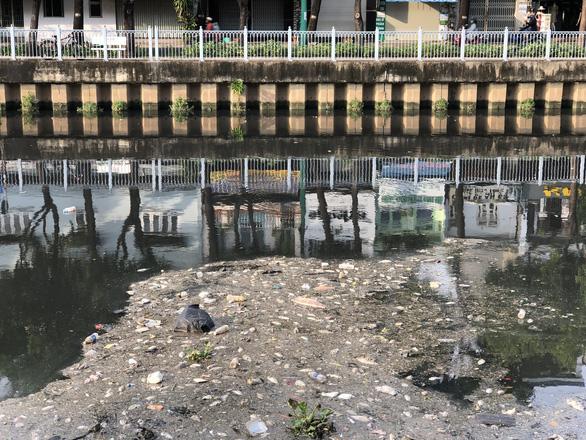 Hai cơn mưa trái mùa làm chết 14 tấn cá trên kênh Nhiêu Lộc - Thị Nghè - Ảnh 3.
