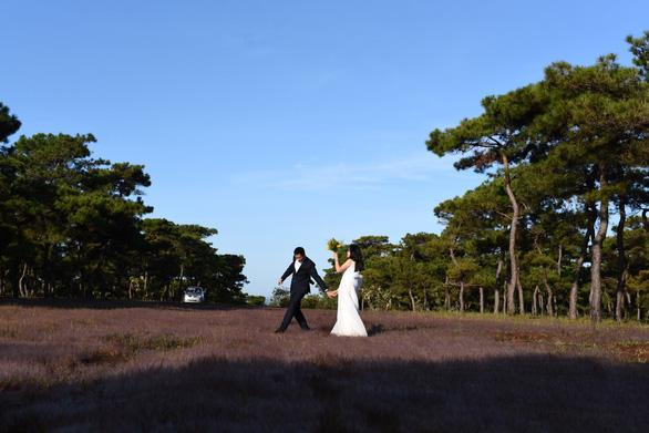 Chuyển mục đích gần 156ha rừng thông cổ thụ để làm sân golf Đak Đoa - Ảnh 1.
