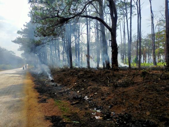 Hết khoan gốc hạ độc lại đốt phá rừng thông - Ảnh 1.