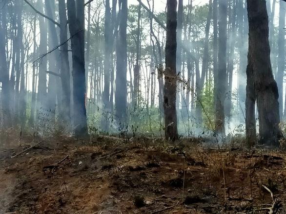 Hết khoan gốc hạ độc lại đốt phá rừng thông - Ảnh 3.