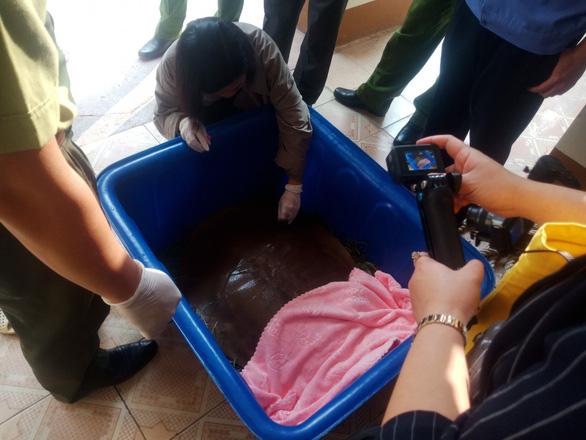 Bắt quả tang một người tàng trữ, buôn bán con giải quý hiếm nặng 22kg - Ảnh 1.