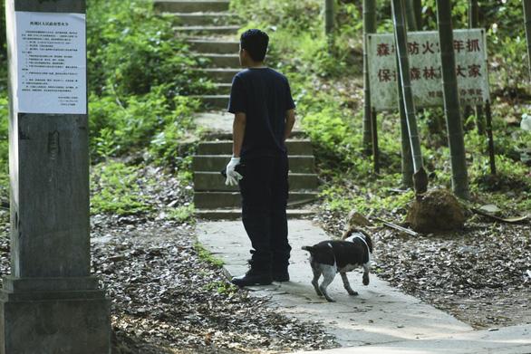 Sở thú Trung Quốc để xổng 3 con báo suốt 1 tuần không trình báo - Ảnh 3.