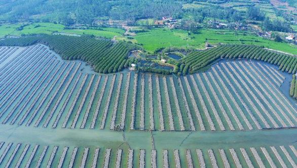 Tuyệt cảnh bàu Cá Cái bị đào bới, phá rừng nuôi trồng thủy sản - Ảnh 4.