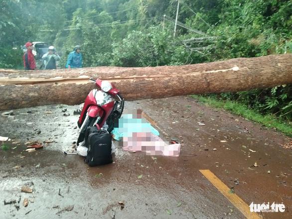 Cây đổ ngang đường Đắk Nông - Lâm Đồng đè chết người đi xe máy - Ảnh 2.
