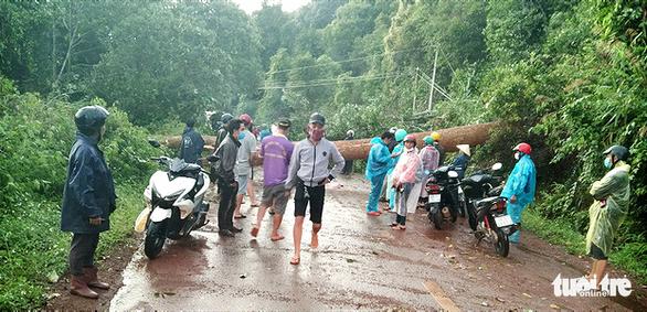 Cây đổ ngang đường Đắk Nông - Lâm Đồng đè chết người đi xe máy - Ảnh 1.