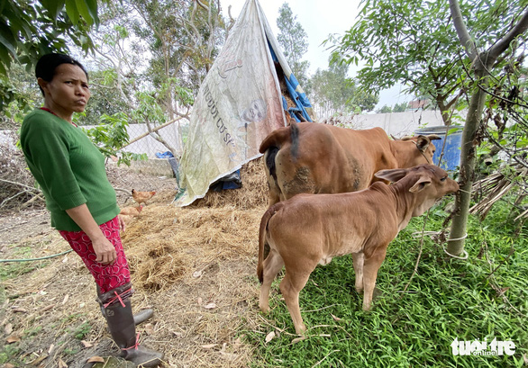 Chợ Hà Tĩnh vắng bóng thịt bò - Ảnh 4.