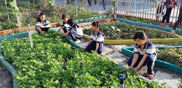 Vườn rau xanh mướt của học sinh tiểu học, phụ huynh nhìn thấy mua ngay - Ảnh 1.