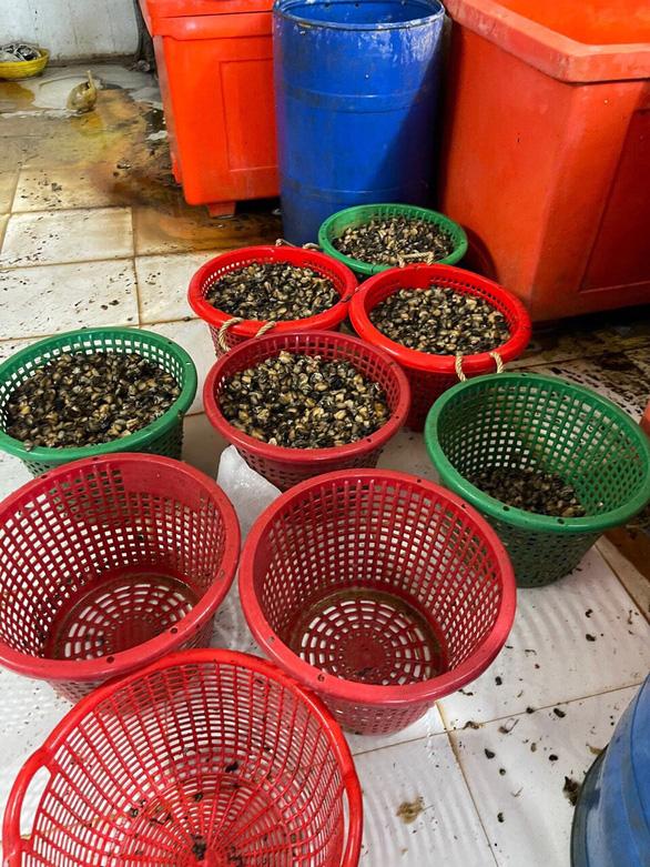 Một cơ sở ở quận 8 ngâm hóa chất hàng tấn thịt ốc bươu để nở, bóng khi bán - Ảnh 4.