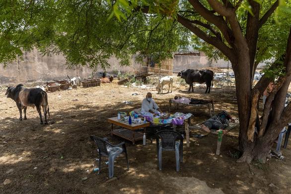 COVID-19 ở Ấn Độ: Người bệnh nằm dưới cây để chữa trị - Ảnh 1.