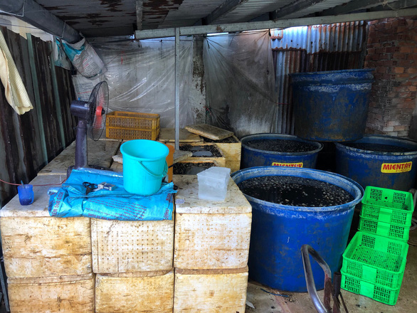 Một cơ sở ở quận 8 ngâm hóa chất hàng tấn thịt ốc bươu để nở, bóng khi bán - Ảnh 1.