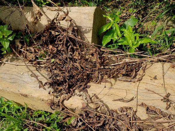 Tìm thấy bãi gỗ lâm tặc giấu giữa rừng già chờ cơ hội đưa ra ngoài - Ảnh 4.