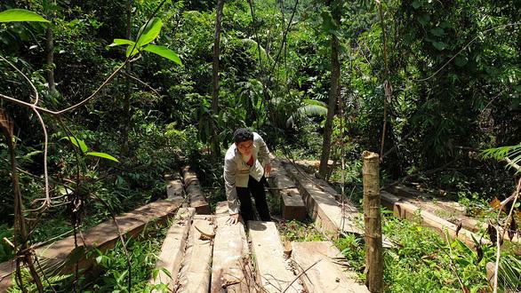 Tìm thấy bãi gỗ lâm tặc giấu giữa rừng già chờ cơ hội đưa ra ngoài - Ảnh 2.