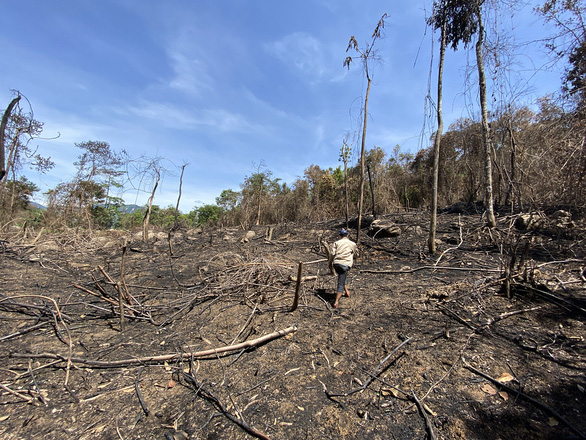 Giám đốc công ty đốt thực bì gây cháy lan cây rừng: Chúng tôi sai! - Ảnh 1.