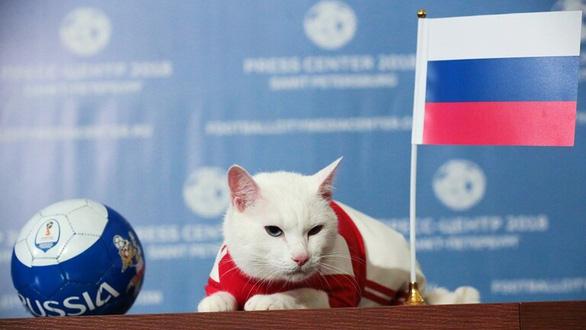 Mèo Achilles được chọn làm nhà tiên tri cho Euro 2020 - Ảnh 1.