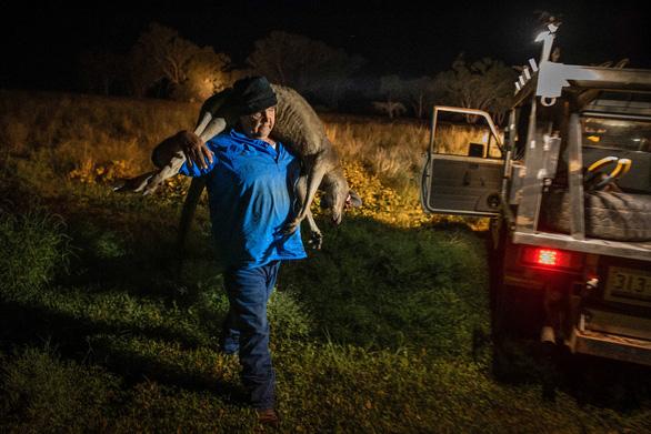 Quyền săn bắn kangaroo của Úc được tranh cãi bên... Mỹ - Ảnh 2.