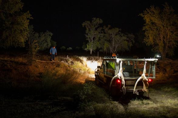 Quyền săn bắn kangaroo của Úc được tranh cãi bên... Mỹ - Ảnh 4.